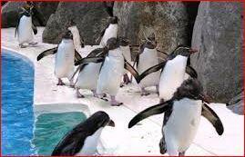 400ペンギン.JPG